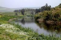Pilgrims and Pesticides